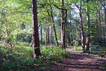 Pine Woods Harrogate